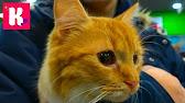 Мы предалагаем вам купить ветпрепараты для кошек и котят по низким ценам в нашем. Капли для наружного применения от чесоточных клещей, блох и. Кот баюн успокоительное средство растительного происхождения для.