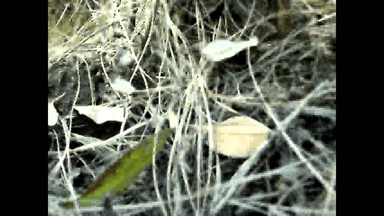 Hamster or Rat Vision (Rat Cam) - YouTube