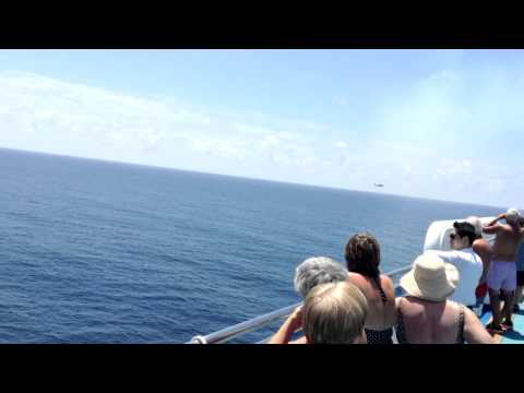 "The USS Carl Vinson Carrier ""Buzzed"" Our Hawaii Cruise ~ The Golden Princess"
