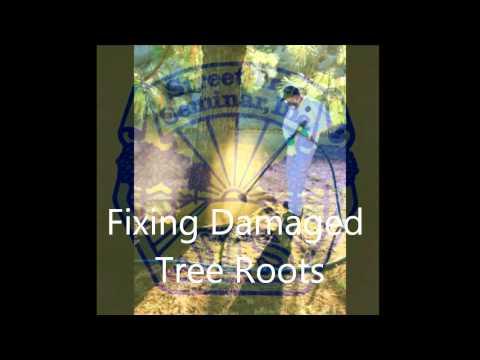 Riverside California Arborist - Sims Tree Health Specialists
