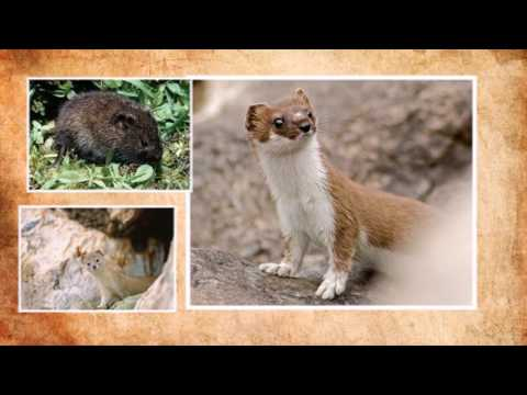 Животный мир Забайкалья.Animal world Transbaikalia.