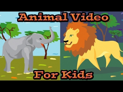 Animal Video for Kids | Kids Learning Videos