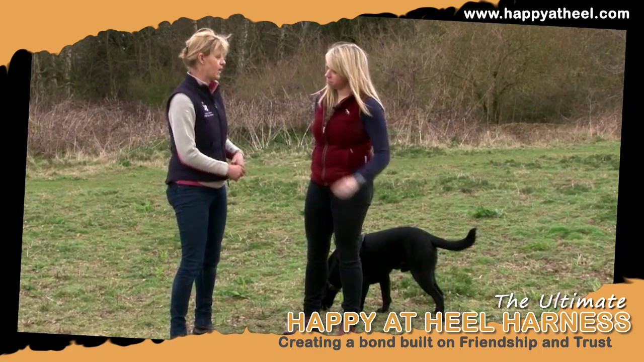 How To Use The Pdl Happy At Heels Harness Youtube