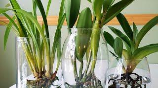 兰花水培之如何换水