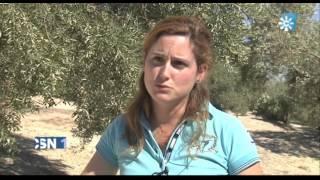 La peligrosa bacteria xylella fastidiosa ya está en España