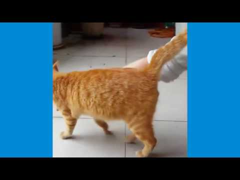 Video Drole Chute D'animaux Video De Chat Drole