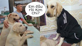 Kim Chi ơi, Em ở đâu rồi? - Củ Cải bỏ ăn vì Kim Chi bị cách ly   I don't want my dog to give birth