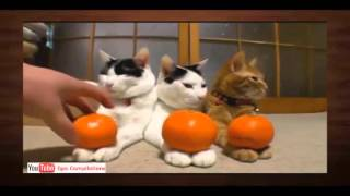 Лучшее видео-ролики про животных 6