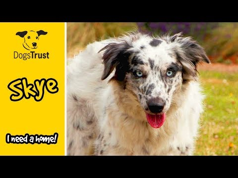 Border Collie Skye is an Affectionate Girl who Loves Exercise | Dogs Trust Harefield