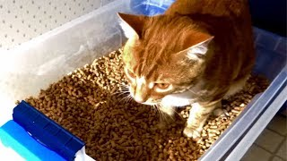 Best Cat Litter-Box Combo - homemade, safe & low-cost!