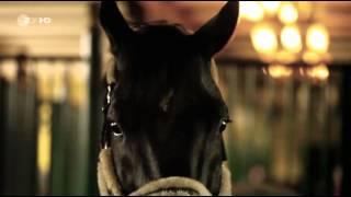Mission Gold: Millionengeschäfte auf dem Rücken der Pferde