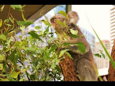 Travel into Wildlife Sydney (Sydney, Australia)