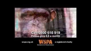 WSPA - An Animal