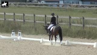 LB2 Pony