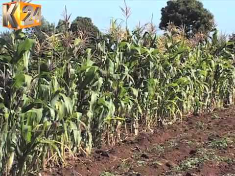 System For Farmers To Acquire Certificates For Importing Plants Online Launched
