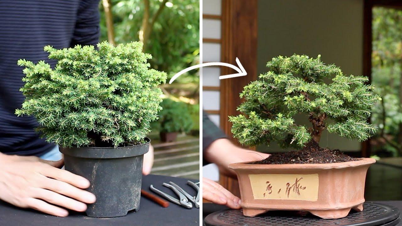 How To Make A Bonsai Tree Youtube