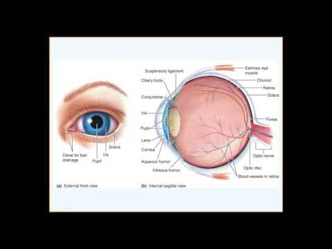 Physiology of the Eye, Undergrad Human Physiology 1 of 2