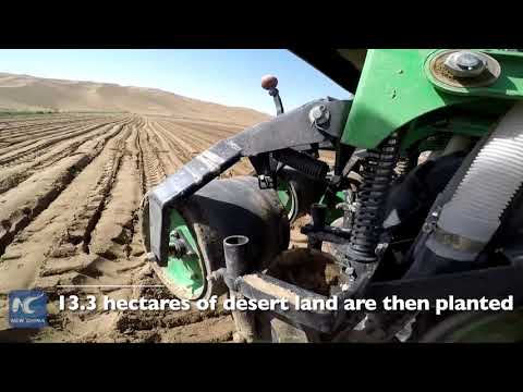 Rice farmers in Xinjiang show that small ideas can grow into big changes