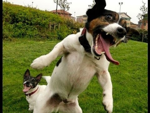 Image result for crazy dogs