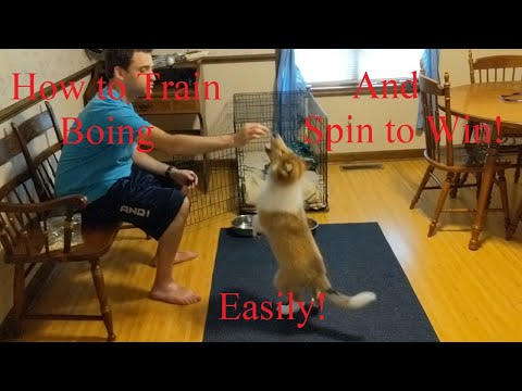 Dog Tricks: How to Teach You Dog Boing and Spin!