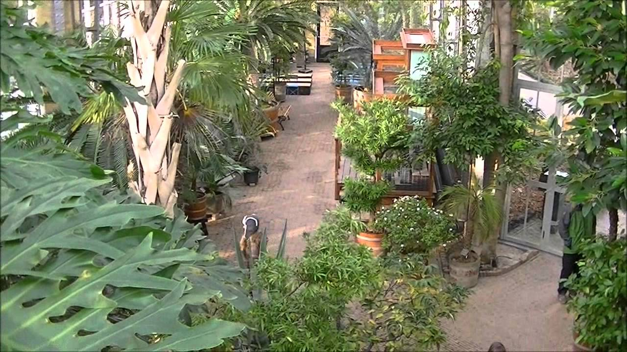 Botanische Tuin Amsterdam : Hortus botanicus amsterdam holland hd youtube