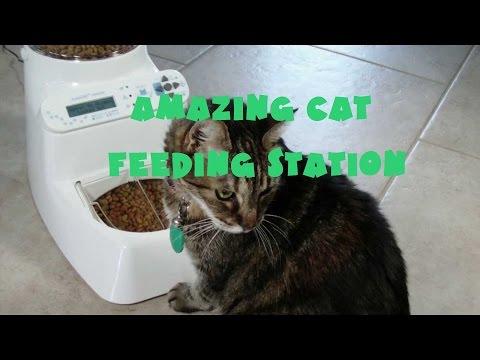 dog proof cat feeder funnycat tv. Black Bedroom Furniture Sets. Home Design Ideas