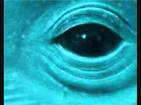 Frank Ocean - Blue Whale [Lyrics]