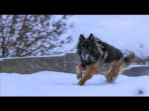 "Xklab - мини фильм ""пес по кличке найк"" #1   a movi ""a dog named Nike"" #1  "