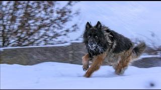 "Xklab - мини фильм ""пес по кличке найк"" #1 | a movi ""a dog named Nike"" #1 |"