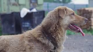 Приют для собак Островок Надежды г Пермь (сайт  островокнадежды59.рф)