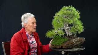 INTERNATIONAL BONSAI ACADEMY with Walter Pall 2013 - Case Study 10/ Pinus nigra
