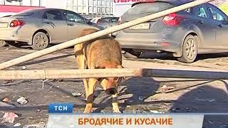 Стаи бродячих собак терроризируют жителей Перми
