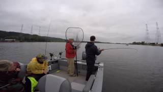 Pro Troll Salmon Fishing on the Willamette River July 4, 2016