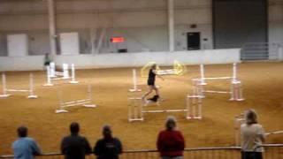 Cavalier King Charles Spaniel Buddington's Polichinelle At Alexa  Oa Axj  2009 Axj  Title Run