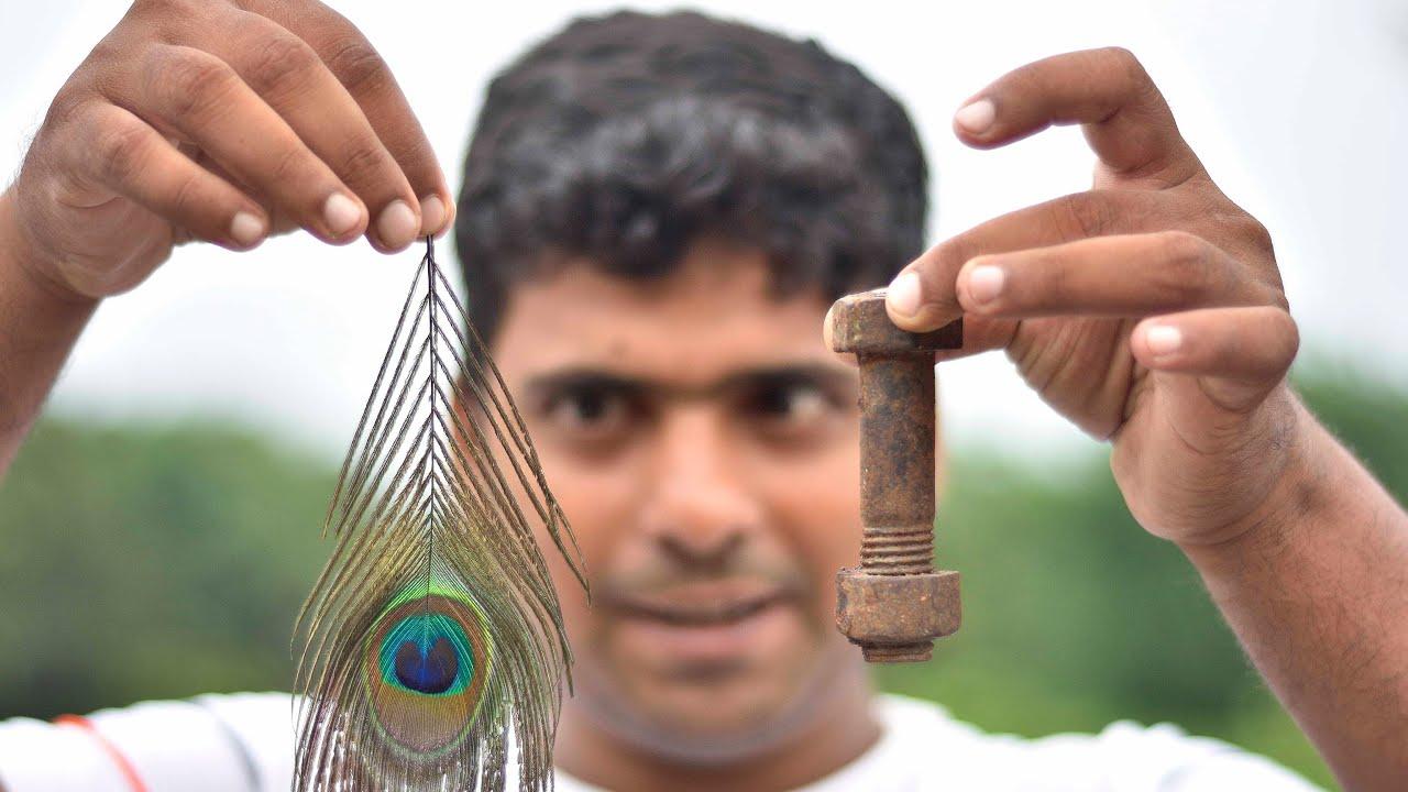 Experiment  पंख  और  लोहे   का  कमाल  ( Vacuum Chamber)