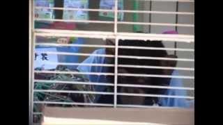Phim hài Nhật Bản - Chó & Khỉ thông minh phần 1 - Tập 19 [HD]