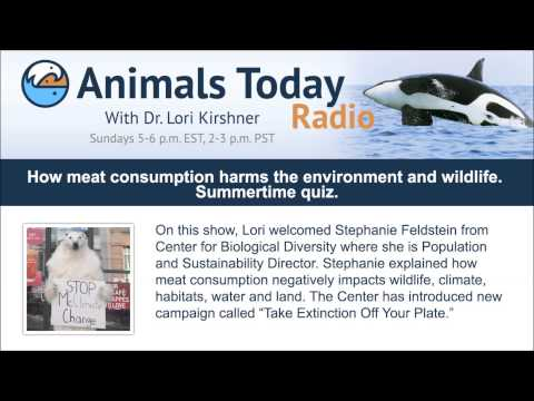 How meat consumption harms the environment and wildlife. Summertime quiz.