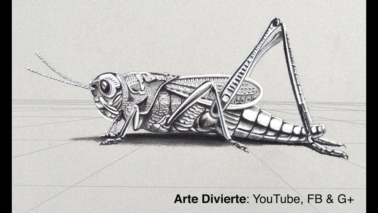 Cómo Dibujar Un Chapulín En 3D