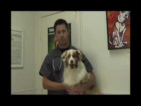 Skin Allergies in Dogs and Cats Part 2