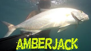 Zıpkınla Akya Avı (Kuzu) Spearfishing Amberjack
