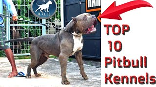 Top 10 Pitbull Kennels / Top Ten XL American Bully Kennels : Best Pitbull Puppies for Sale
