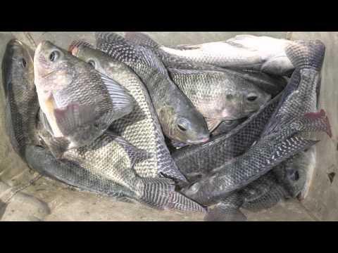 How To Hack Aquaculture