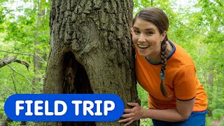 Let's Learn About Trees | Caitie's Classroom