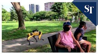 Spot robot patrolling Bishan-Ang Mo Kio Park | The Straits Times
