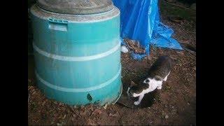 コンポスト容器で出来た猫の家Cat house made of compost container 【いなか猫1890】japanese funny cat
