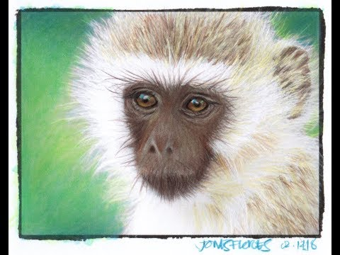 Part 1 of Coloring Fur with Colored Pencils: Long Fur - the Monkey