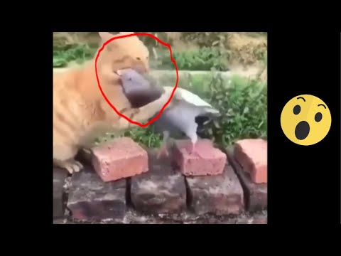 funny cute cats Videos Compilation- cutest funniest cats - omg funny! #9