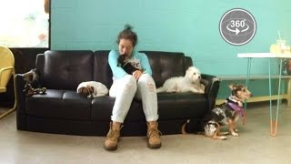 America's First Dog Cafe (360° Video)