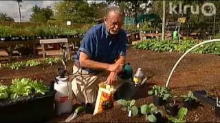 John winter vegetables: Central Texas Gardener