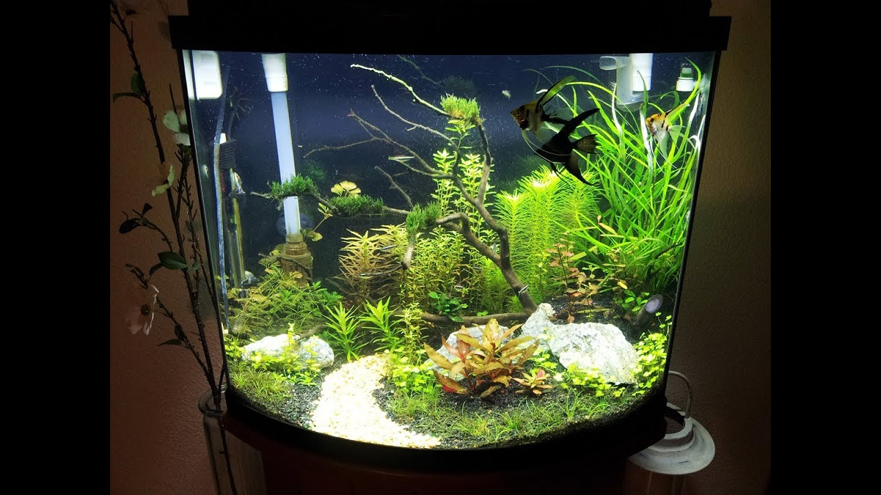 Aqueon 26g planted update 2 youtube for Aqueon fish tank
